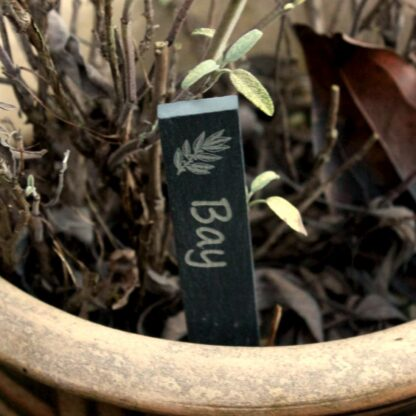 Bay plant marker placed in pot