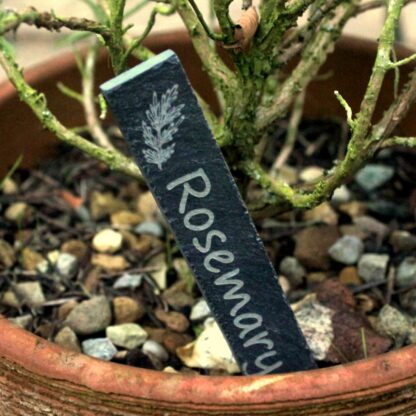 Plant marker placed in plant pot with rosemary
